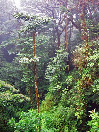 Окрестности Монтеверде, Коста-Рика. Фото: www.monteverdetours.com
