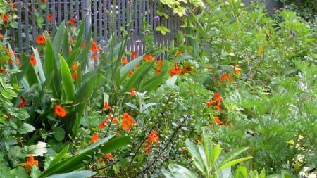 Заросший сад. Квакер-универсалист размышляет.