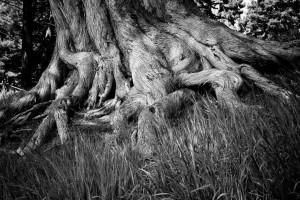 корни, основы сообщества