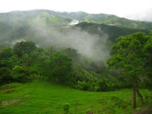 Туманные леса. Община Монтеверде