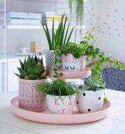 Растения похожи на людей